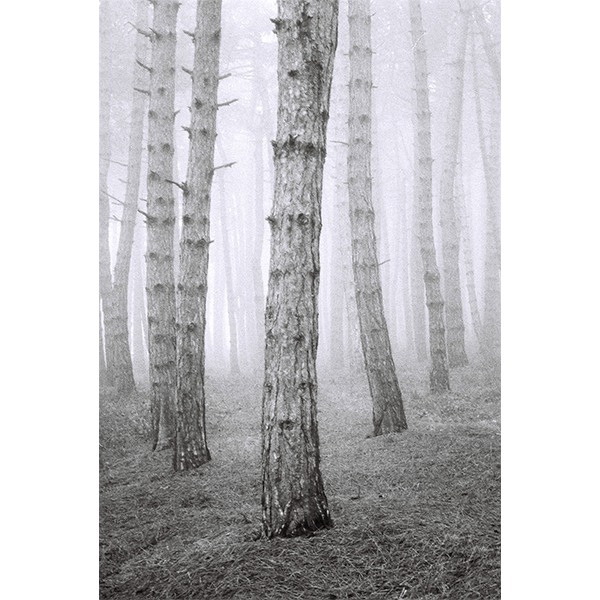 Landscape in the Mist - Open Edition Print by Gela Shekeladze