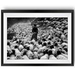 Sheep Drive Limited Edition Print by Maurice Wolf